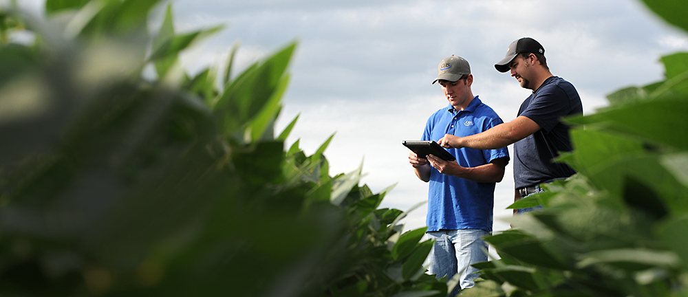 Growers in the field